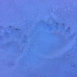 rastres Toran 2017-02-25 at 14.05.22 (1)