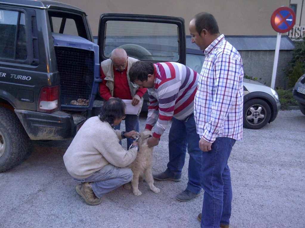 Vielha e Mijaran-cans ramaders