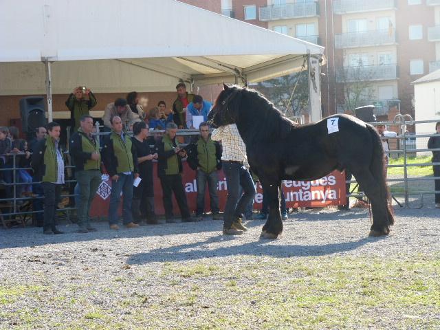 """Representants dera Associacion de criadors deth shivau de raça """"Cavall Pirenenc- Català"""" dera Val d'Aran"""